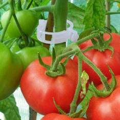 Pomidorų segtukai. 50 vnt.