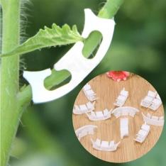 Augalo šakelių apsauga 50 vnt.