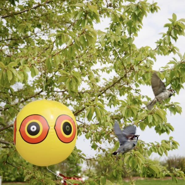 Balionas paukščiams baidyti
