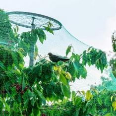 Apsauginis tinklas nuo paukščių, 4 x 6 m