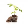 Augalų priežiūrai